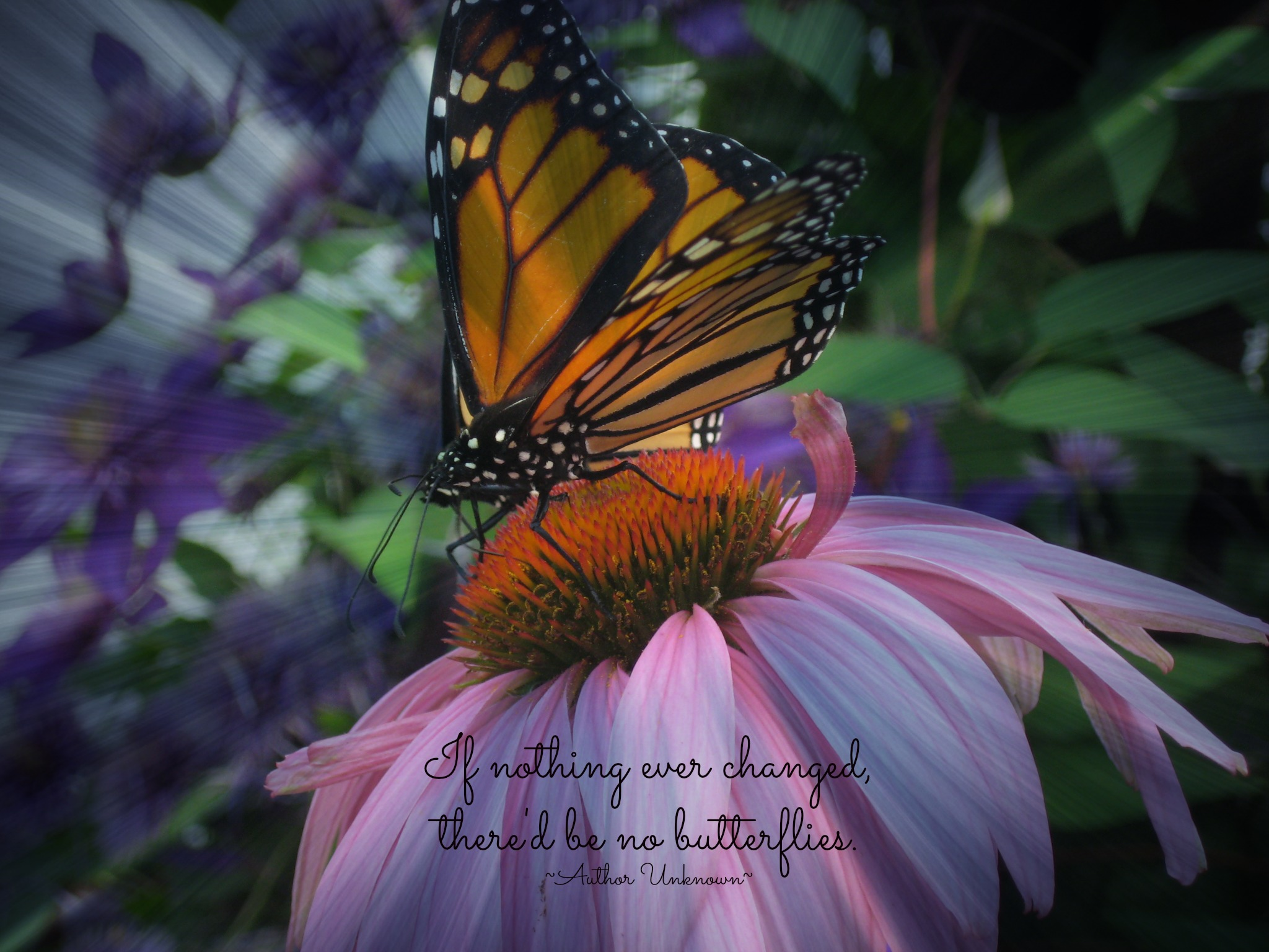 0a5118e1a Butterfly Poems and sayings - an assortment of poems about butterflies