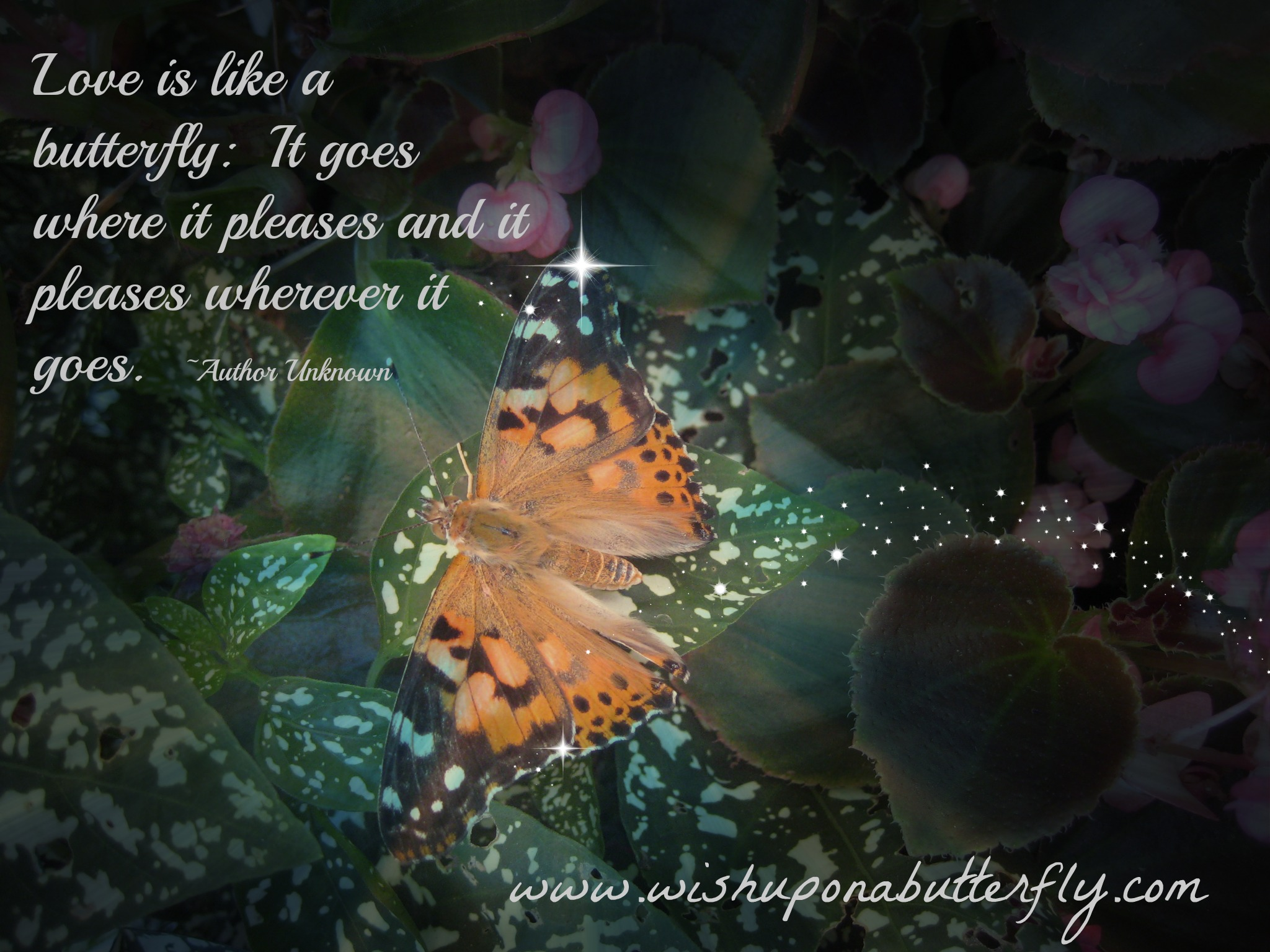 Celebration Of Life Quotes Death Butterfly Poems And Sayings  Wish Upon A Butterfly